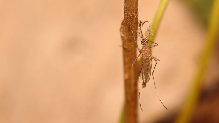 Faktor Penyebab Badan di Gigit Nyamuk