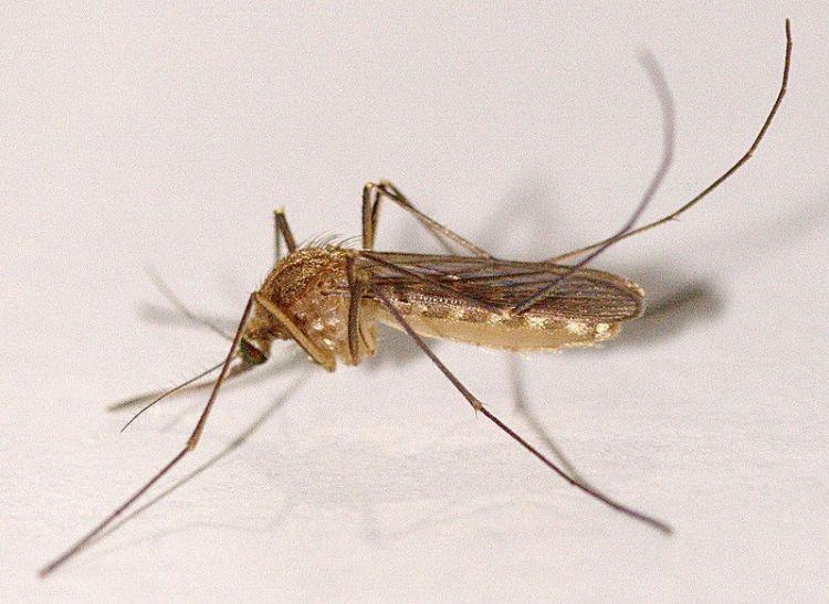 Lotion Anti Nyamuk yang Cocok buat Bayi