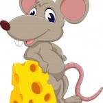Makanan yang cocok untuk umpan tikus
