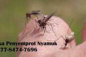 Jasa Penyemprot Nyamuk