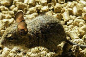 Cara Mudah Membuat Perangkap Tikus Unik