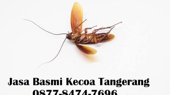 Jasa Basmi Kecoa di Tangerang