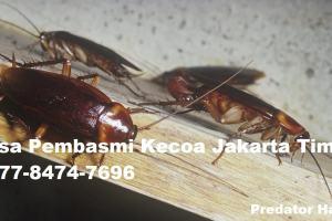 Jasa Pembasmi Kecoa Jakarta Timur