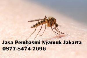 Jasa Pembasmi Nyamuk Jakarta