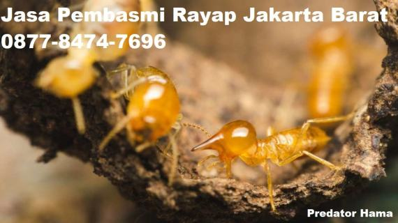 Jasa Pembasmi Rayap Jakarta Barat