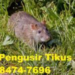 Jasa Pengusir Tikus