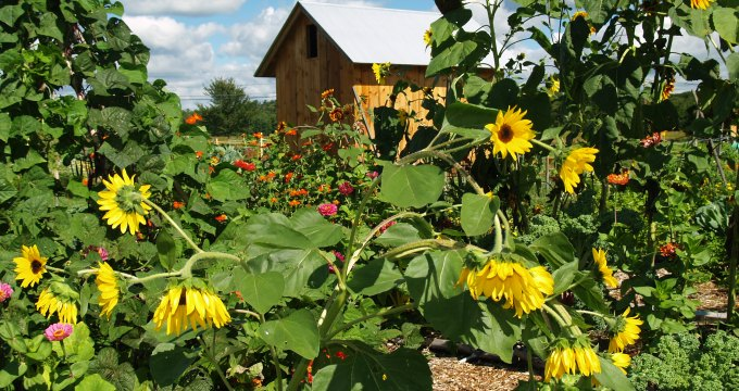 Historic farm preserved as community agricultural co-op