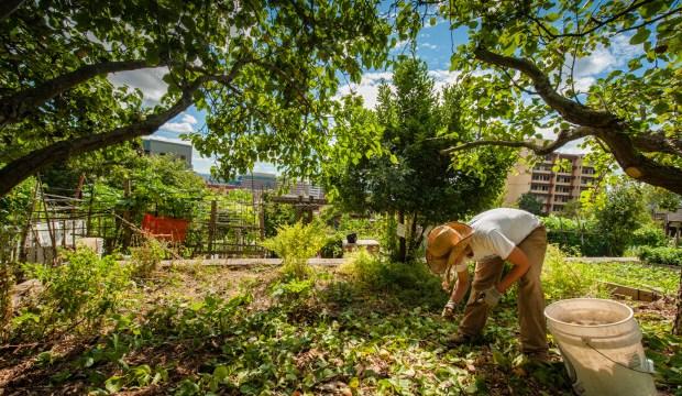 Danny Woo Community Garden