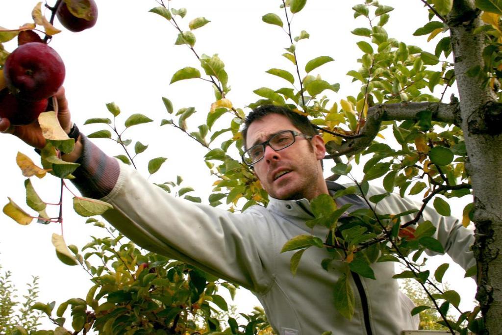 nonprofit-gleans-fruit-leftover-after-harvest