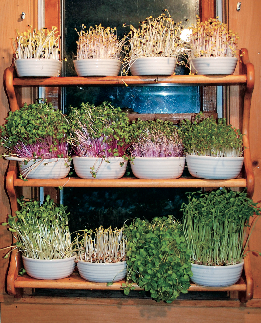 Tiny Windowsill Garden Yields A Constant Supply Of Greens