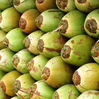 coconuts-331258__340
