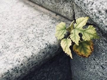 leaf-3214458__340