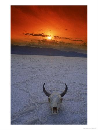 323861bull-s-skull-lying-in-the-desert-posters