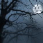 மரமும் நிழலும், மற்றும் சில கவிதைகள்