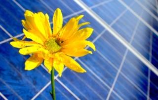 panel-flower