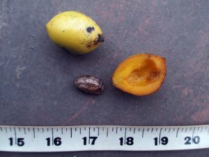 9_fruit-and-seed_manoranjitham_700