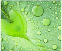 Valentines_day_Spring_Love_Pablo_Neruda_Trees_Water_heart_Leaf_Sparkle_Bloom_Plants