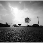 சீமைக் காரைச் சாலை