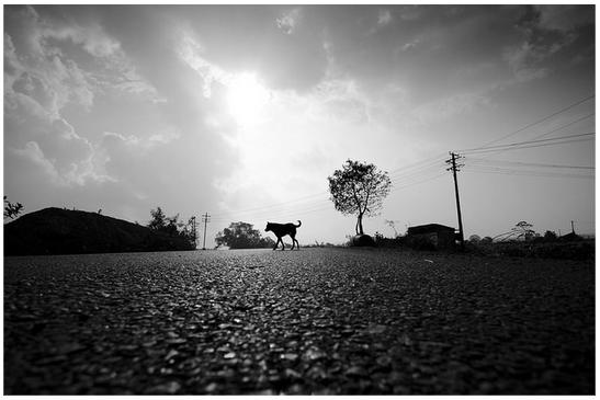 Village_Road_Telugu_Andhra_India_Empty_TN_TamilNadu