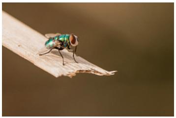 House_E_Kosu_Fly_Mosquito_Home_Object