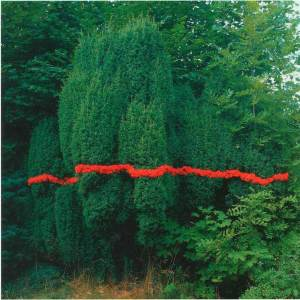 Landscape_Fern_Trees_Nature_Green_Red_Colorful_Arts_Earth_Moma_Met_NYC