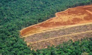 Ezequiel_Antonio_Castanha_Brazil_Amazon_Forest_Novo_Progresso_Para_Deforestation_Environment_Global_Warmin_Carbon_Emissions