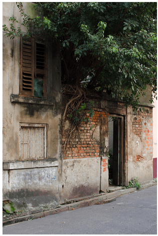 Tamil_Nadu_Classic_Houses_Old_Homes_India_Native_Nostalgia_Trees_Grow_Roots_Antique_Village_Rural