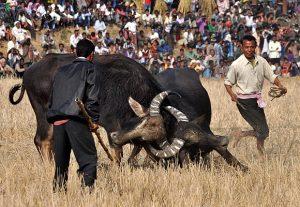 15buffalo1