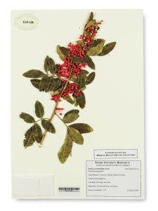 herbal_ancient_medicine_antibiotics_drugs_plants_mom_grandma_nyt