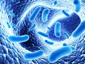 Pictures of bacteria, a possible cause of IBS