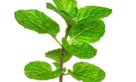 Enteric Peppermint Oil Capsules for IBS