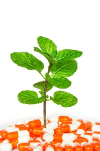 Peppermint plant growing out of enteric peppermint oil capsules.