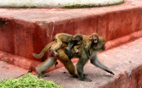 Swyambhu Nath monkey temple - Kathmandu, Nepal