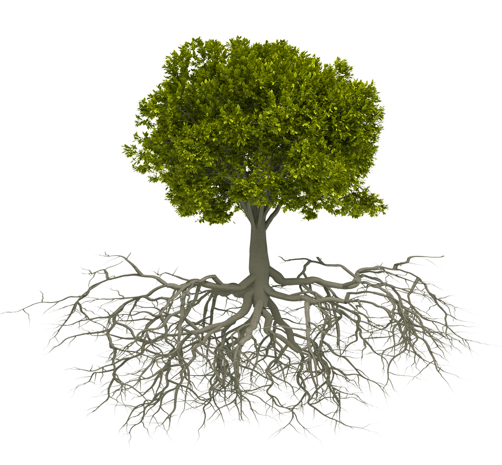 tree-with-roots