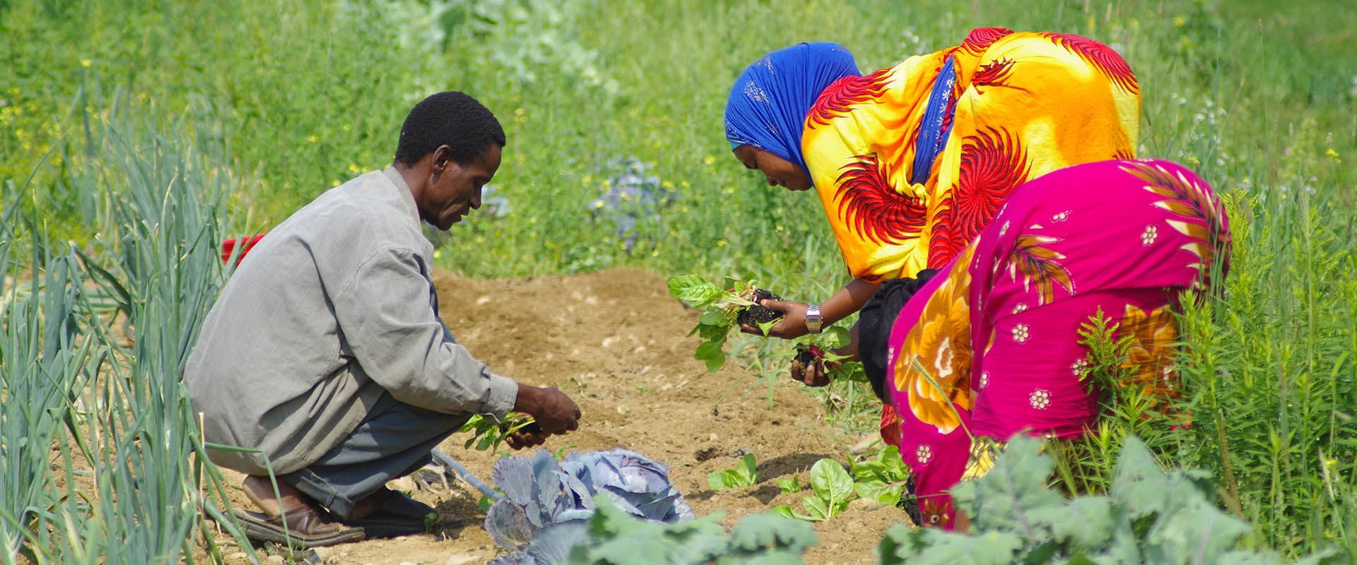 Somali people working at Liberation Farms