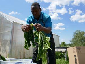 Somali Bantu man with organic produce at Liberation Farms
