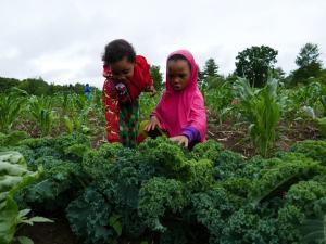 Two Somali Bantu girls farming at Liberation Farms