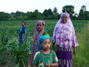 Somali Bantu women harvesting at liberation farms
