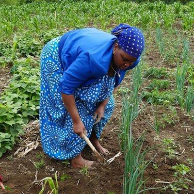 A Somali Bantu woman farming
