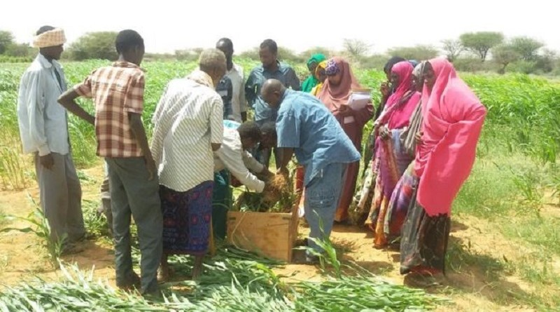 People share resources such as food and most work on an informal basis in Somaliland
