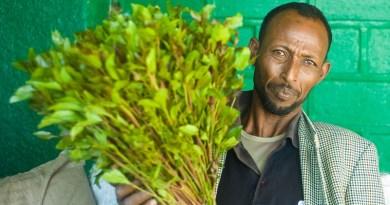 Somaliland Revokes Ban on Khat Imports