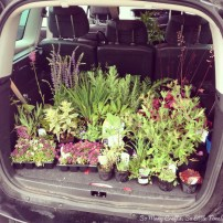 A boot full of plants