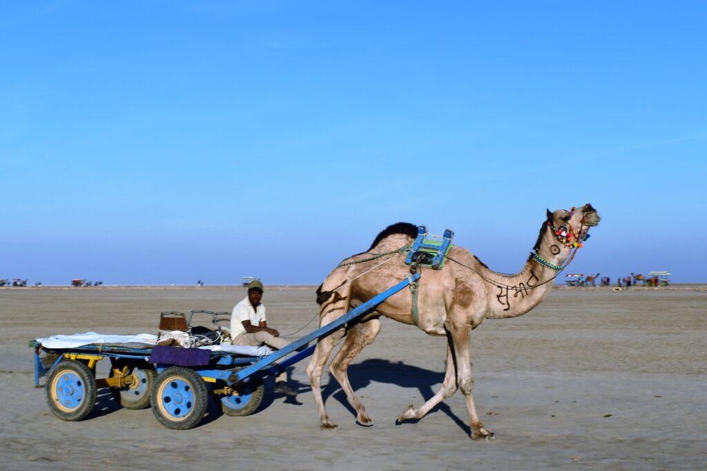 Camel Cart, Rann Utsav