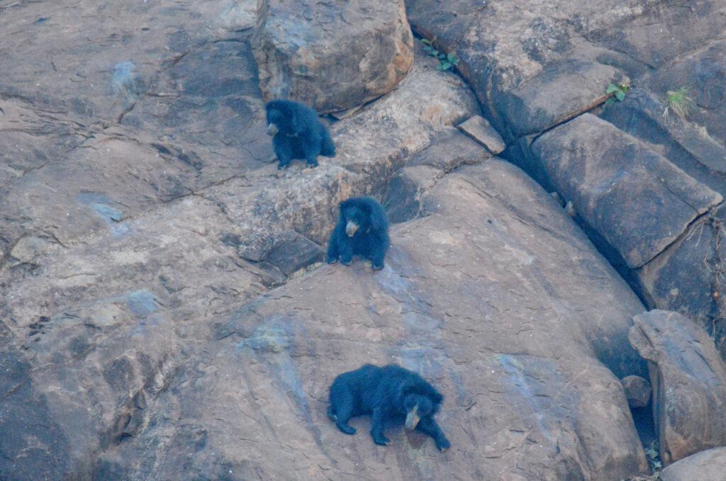 Sloth Bear Sanctuary, Hampi