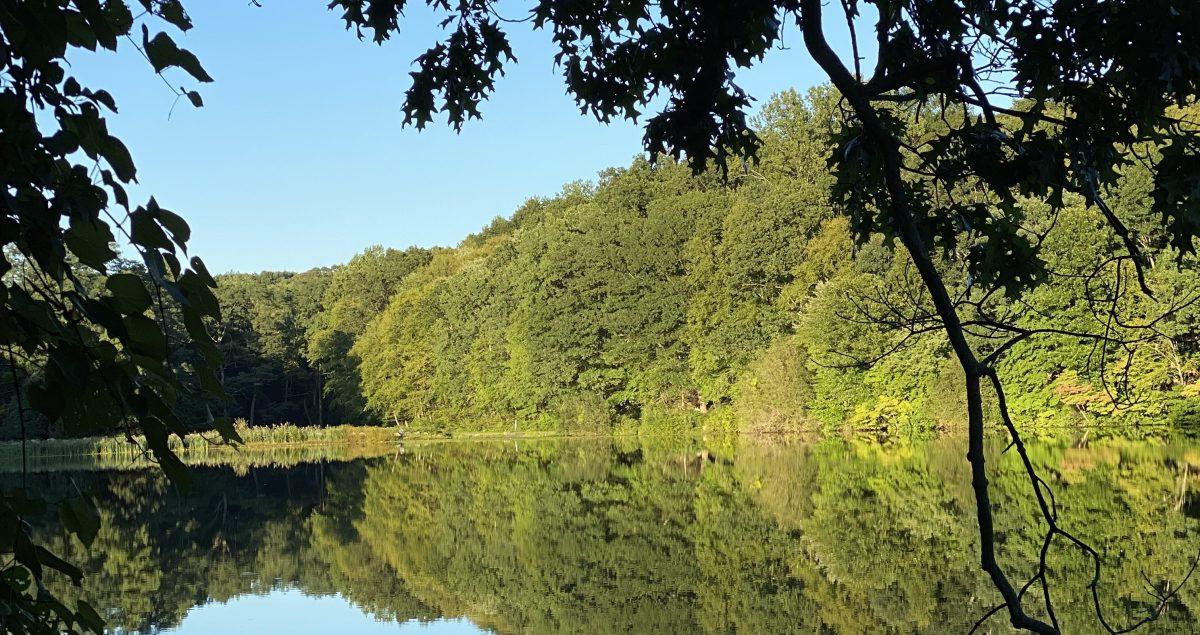 Footstep Sounds in Rockefeller State Preserve