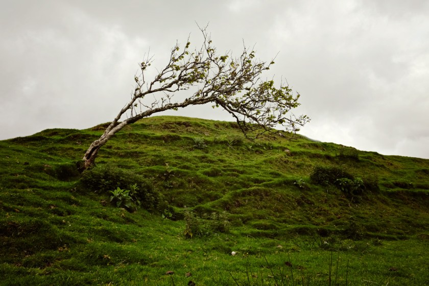 Blown Tree