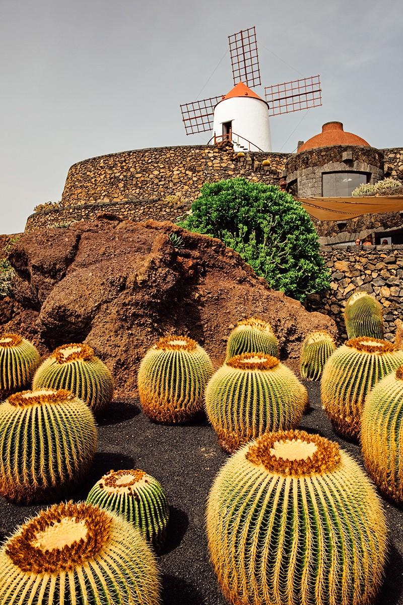 Cactus Garden Lanzarote