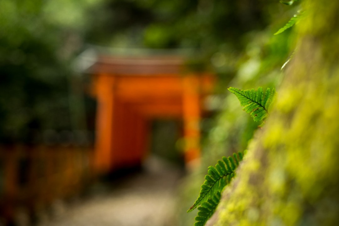 torii in the forest