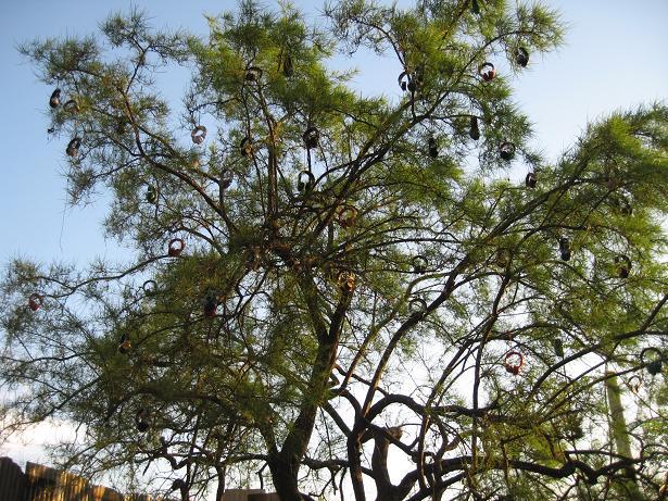 fader fort tree