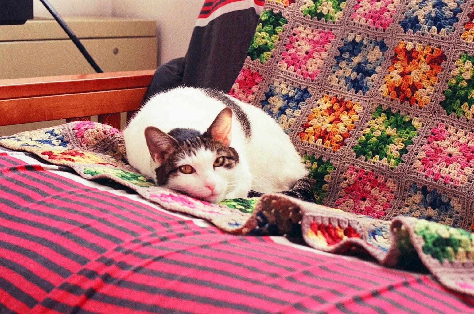 Mei Mei enjoying granny's blanket